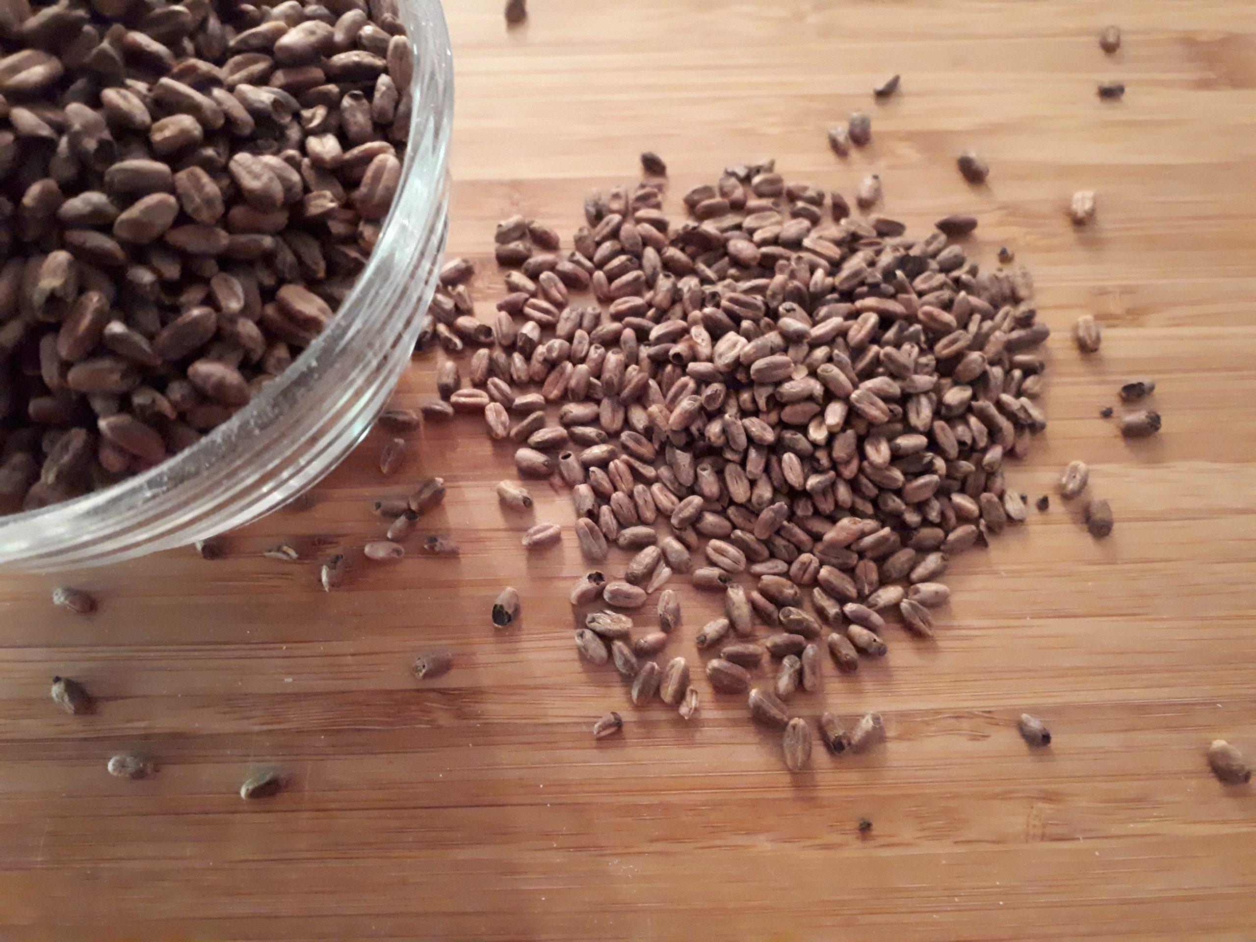 Caramel Wheat