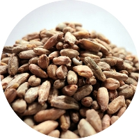 23110 gambrinus wheat malt 55 lb